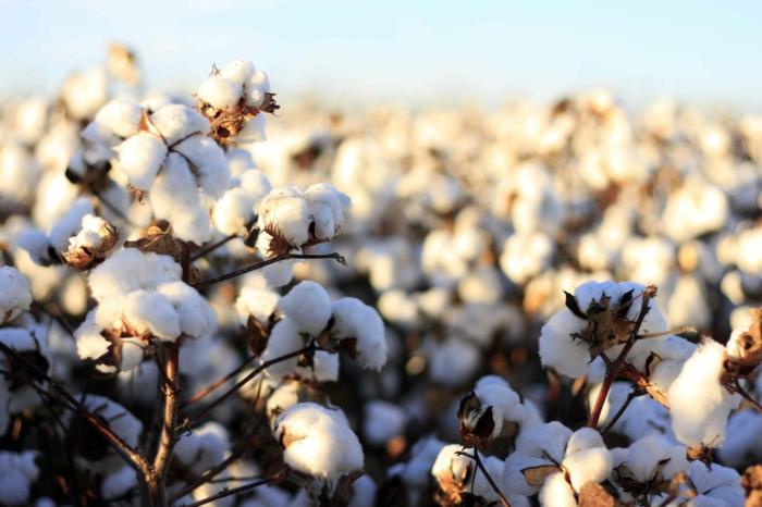 fairtrade baumwolle naturstoffe gesunde textilien