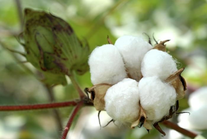 bio baumwolle textilien stoffe kleidung gesund nachhaltig