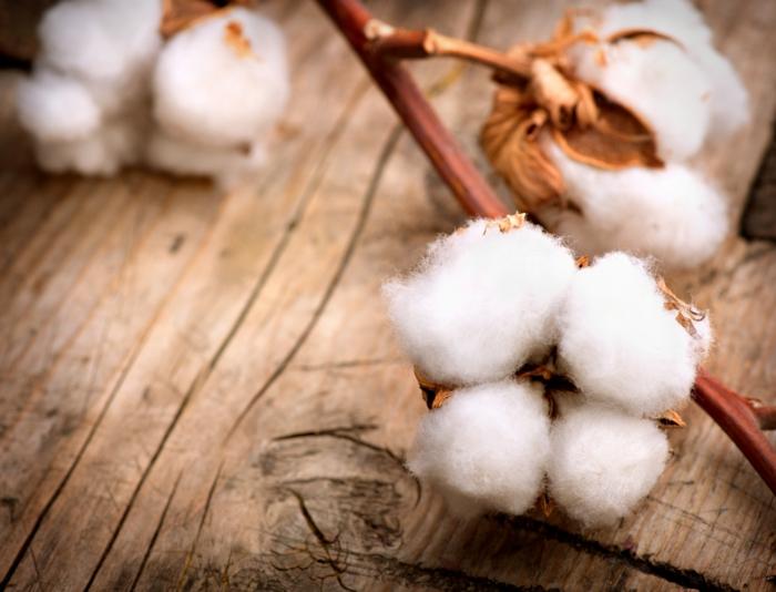 bio kleidung baumwolle naturstoffe textilien gesunde kleider tragen