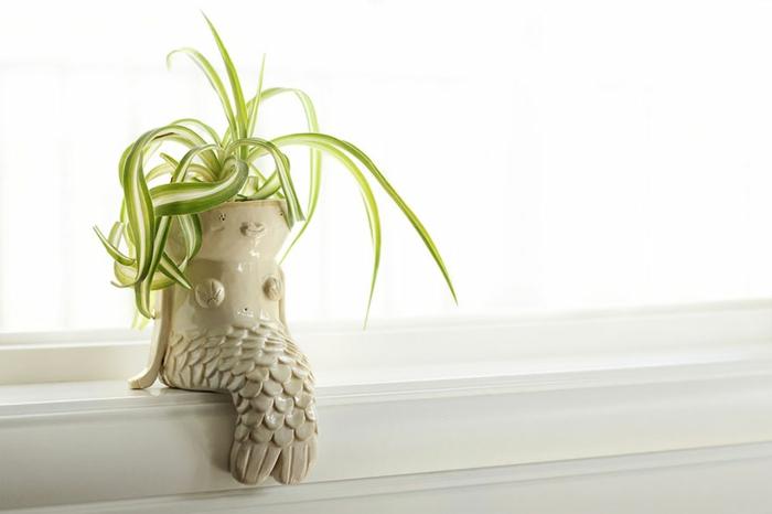 blumenkübel zimmerpflanzen grünpflanzen pflanzgefäß meerjungfrau