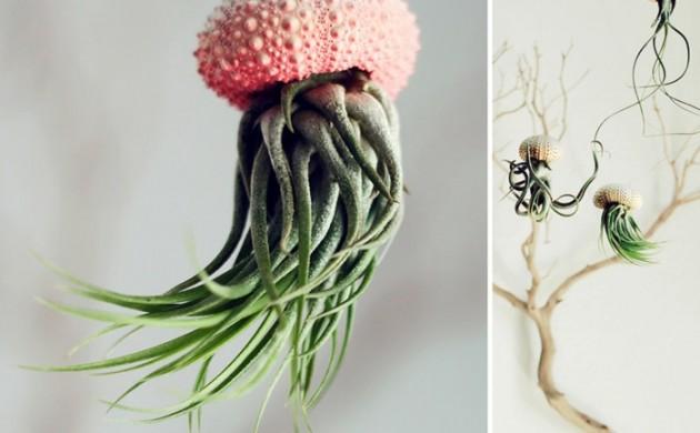 blumenkübel-zimmerpflanzen-luftpflanzen-übertopf-meeresfund