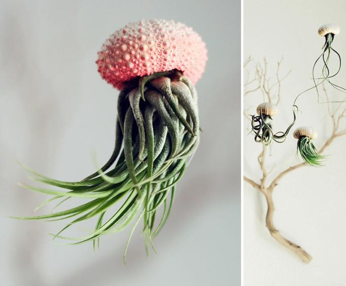 blumenkübel zimmerpflanzen luftpflanzen übertopf meeresfund