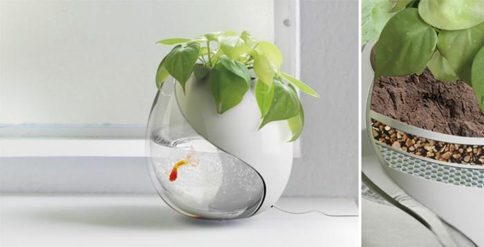 pflanzkübel zimmerpflanzen ovale pflanzgefäße aquarium