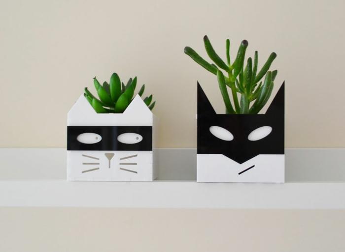 blumenkübel zimmerpflanzen sukkulenten katze kater schwarz weiß