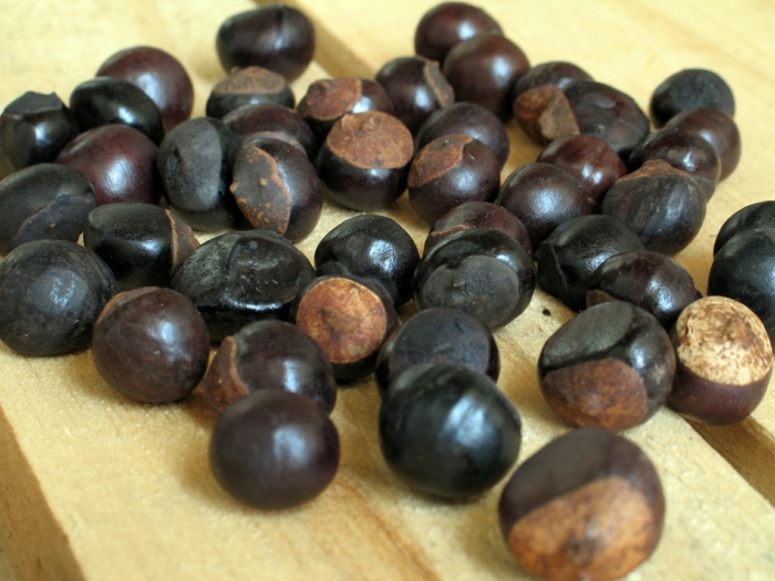 guarana pulver ernte früchte kastanien
