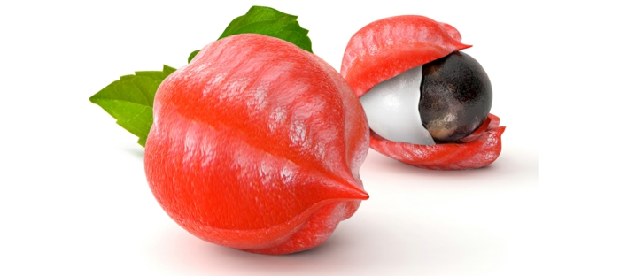 guarana pulver paullinia cupana pflanze reife früchte rote schalen