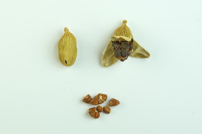 Elettaria cardamomum aromatisch gesund samen grüne hülse