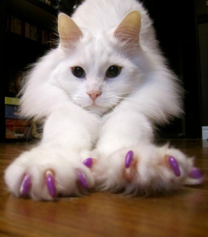 katzen erziehen hauskatzen haltung katzenkrallen kappen