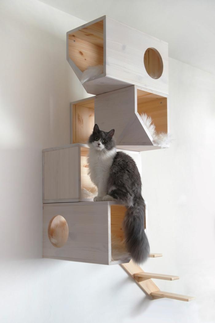katzen erziehen hauskatzen haltung katzenmöbel wanddeko