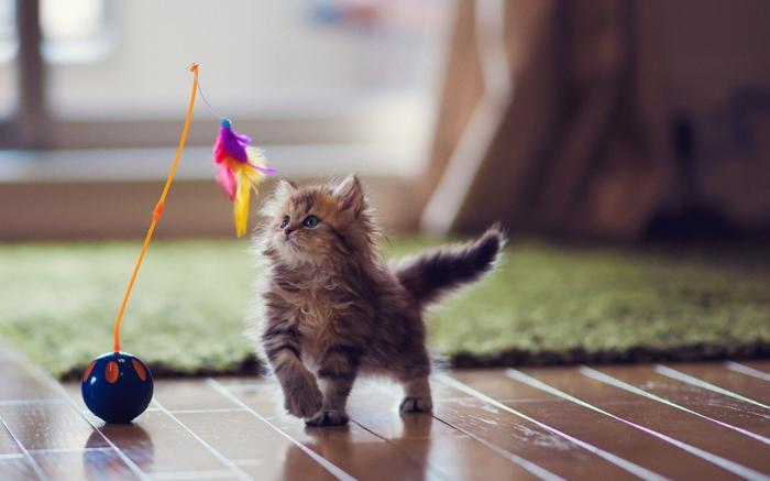 katzen erziehen tipps hauskatze katzenbaby haltung