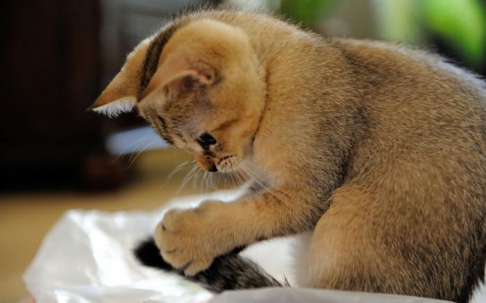 katzen erziehen tipps hauskatze lustige katzenbilder
