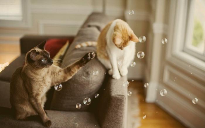 katzen erziehen tipps hauskatzen am spielen