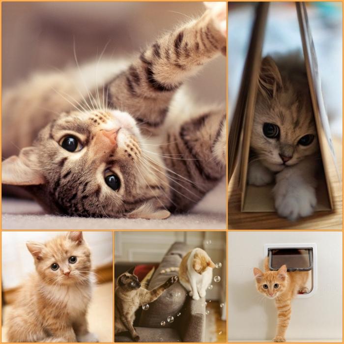 katzen erziehen tipps hauskatzen haltung katzenmöbel kaufen