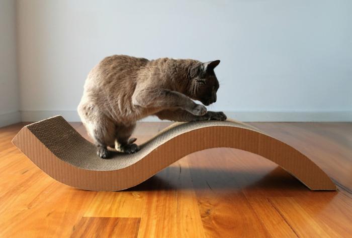 katzen erziehen tipps hauskatzen haltung katzenmöbel kratzbaum