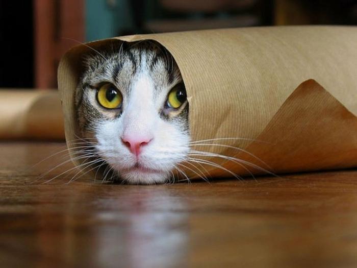 katzen erziehen tipps hauskatzen haltung lustige katzenbilder