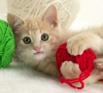 Worauf kommt es an bei der Katzenerziehung?