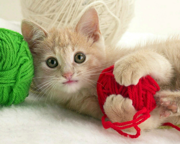 Katzen Spiele Online Gratis