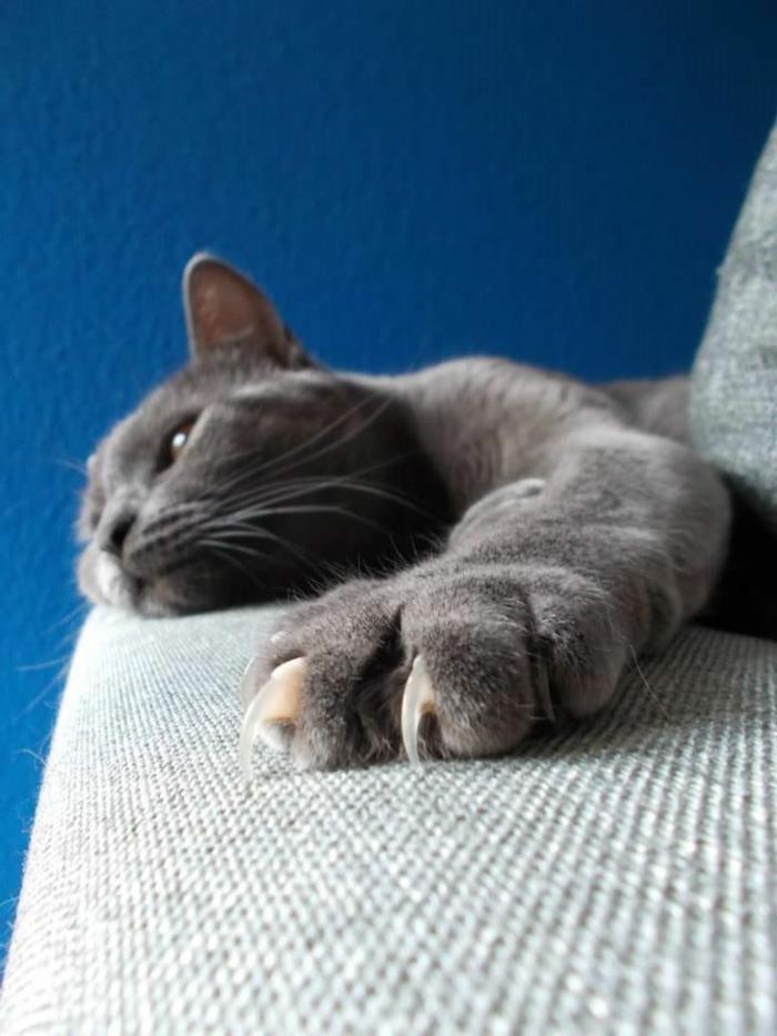 katzen erziehen tipps katzenmöbel katzenkrallen
