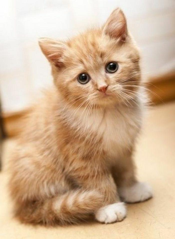 katzen erziehen tipps katzenmöbel kratzbaum kaufen