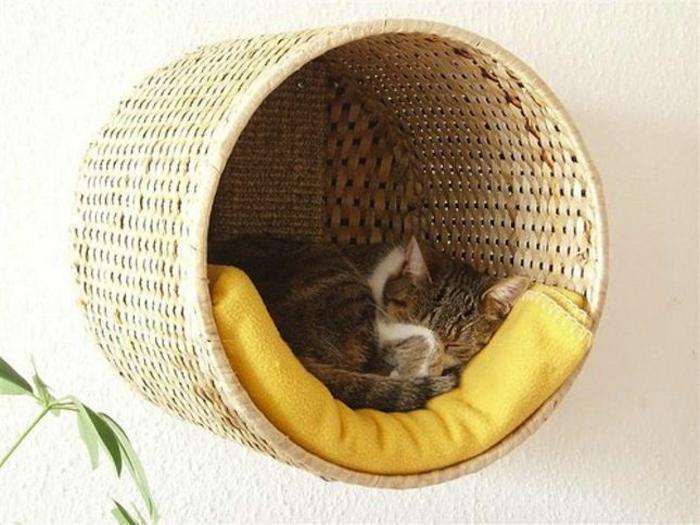 katzen erziehen tipps katzenmöbel katzenbett an der wand