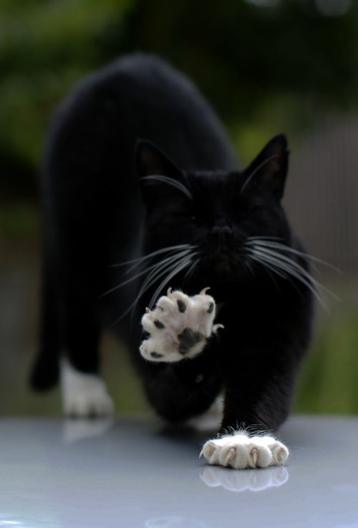 katzen erziehen tipps katzenmöbel lustige katzenbilder