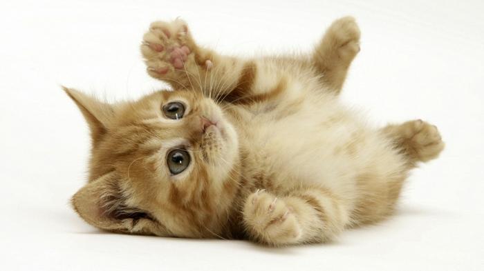 katzen erziehen tipps kleine katzenbaby