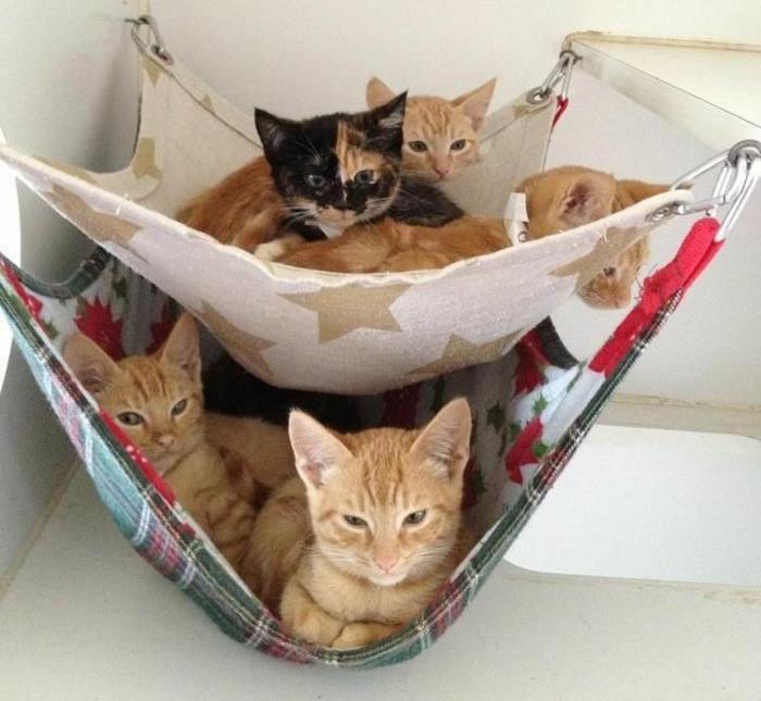 katzen erziehen tipps katzenmöbel katzenbett
