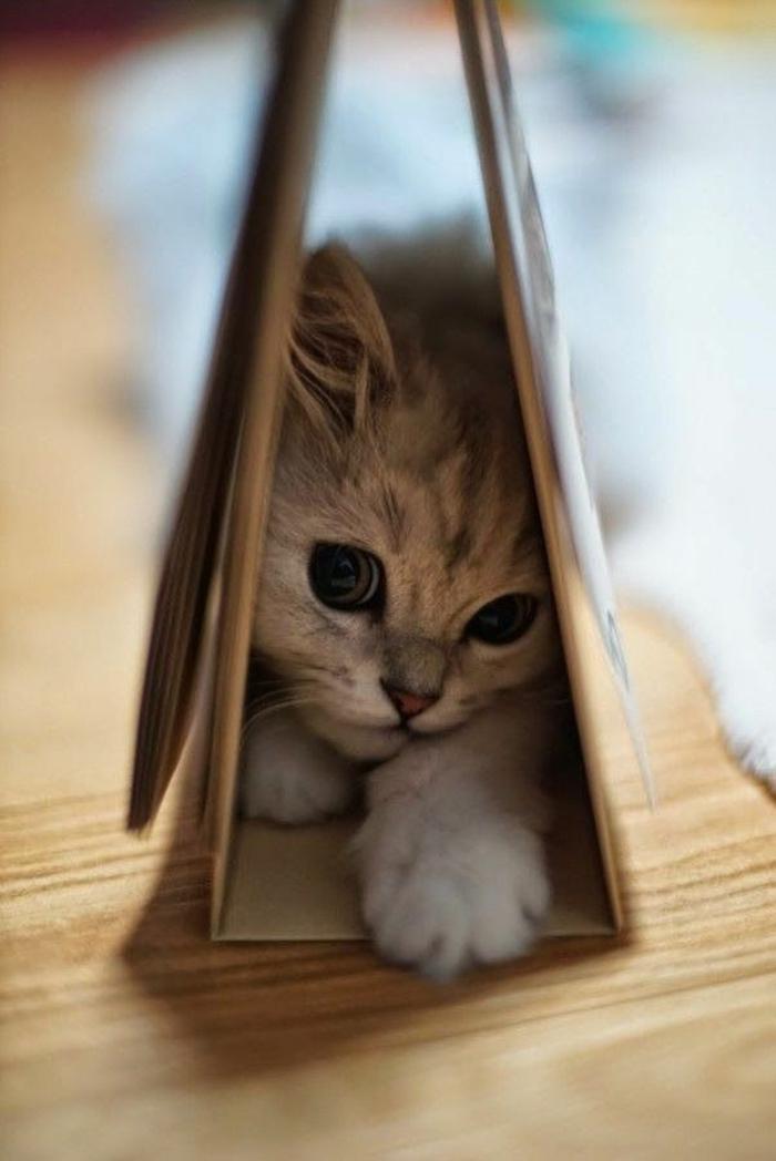 lustige katzenbilder tipps katzen erziehen hauskatze