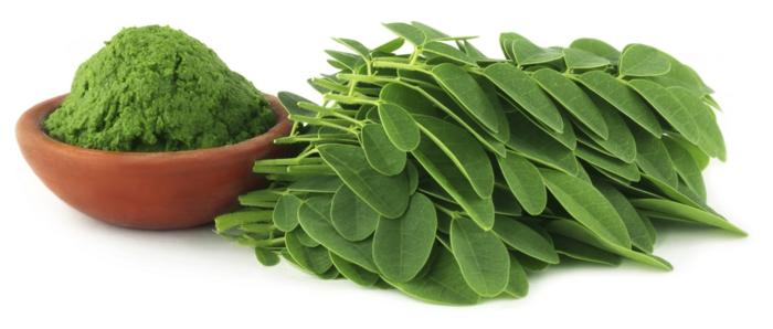 moringa tee gesund grüne blätter protein vitamine