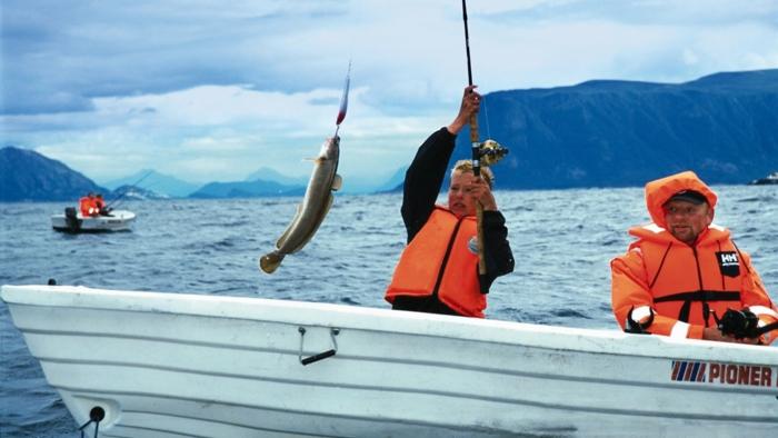 norwegen fjorde fisch angeln