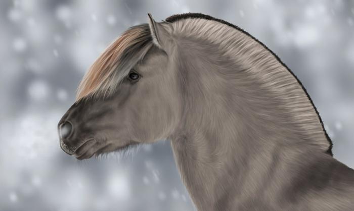 norwegische fjorde fjord pony
