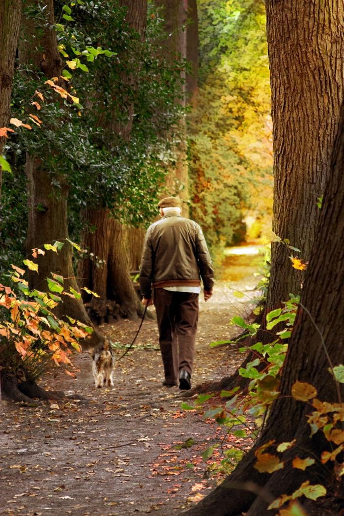 positiv denken lernen spaziergang natur alter mann hund