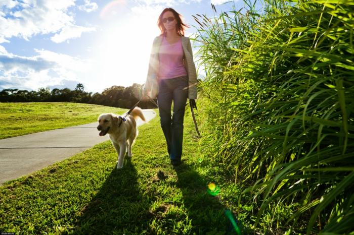 positives denken lernen hund spaziergang natur