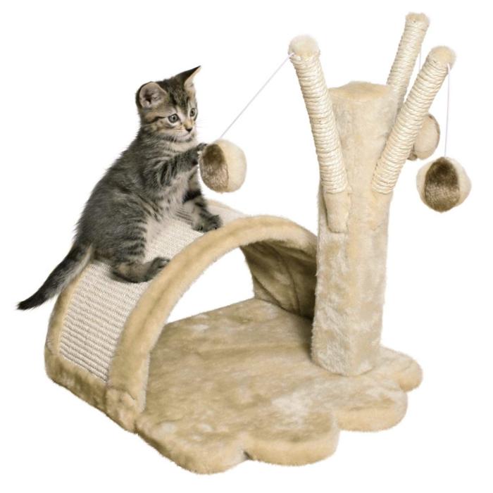 tipps katzen erziehen hauskatze haltung kratzbaum