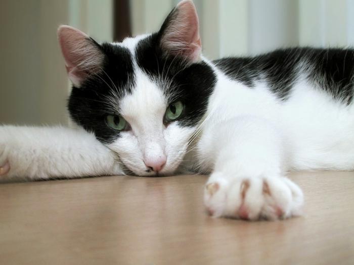 tipps katzen erziehen hauskatzen haltung katzenbilder