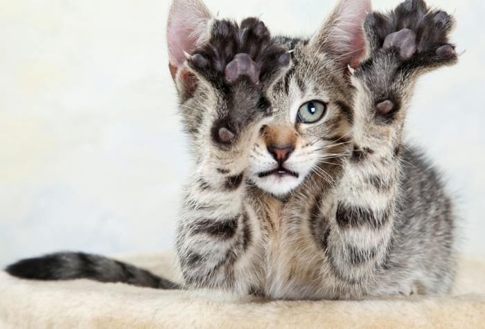tipps katzen erziehen hauskatzen haltung kratzbaum