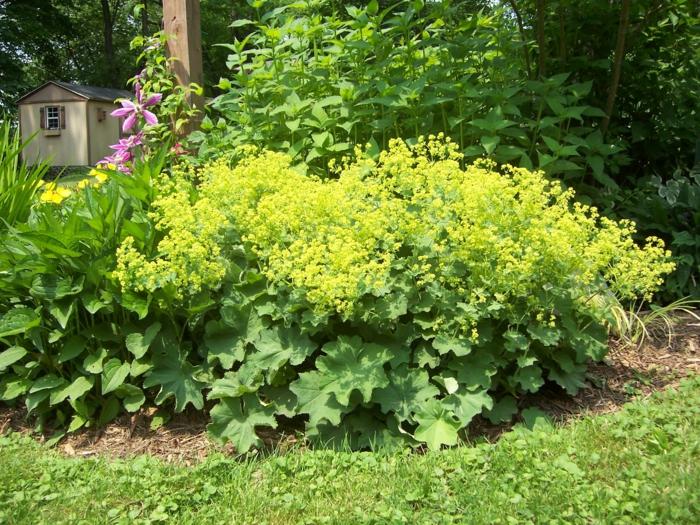 vorgarten mit pflanzen gestalten - 40 ideen, wie sie ein frisches, Garten und Bauen