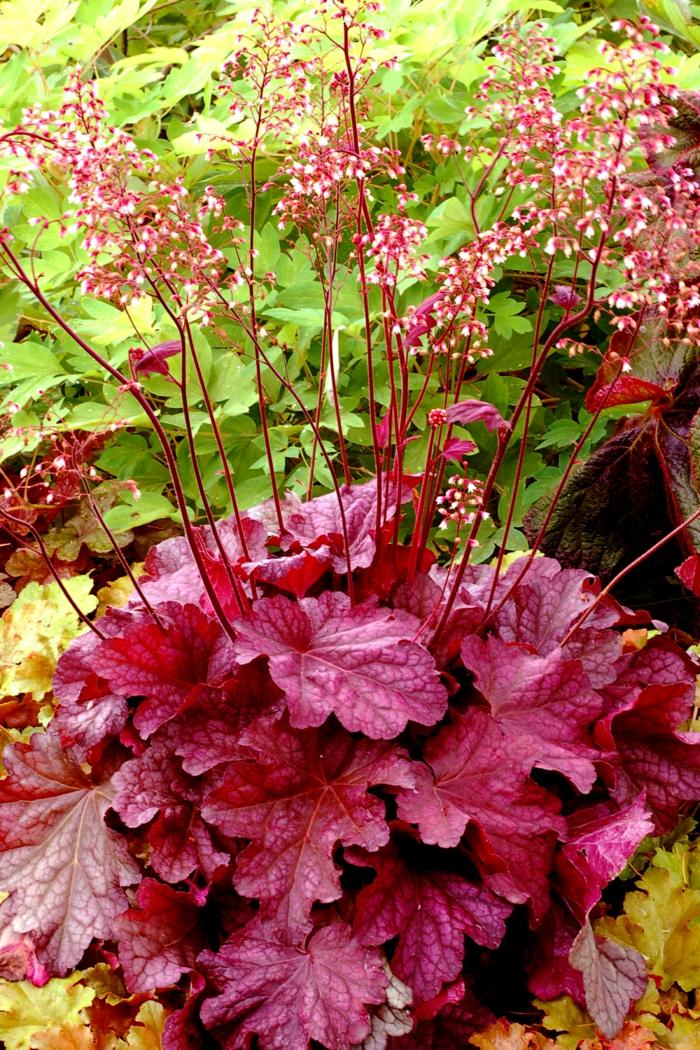 vorgarten pflanzen Heuchera schöne blätter garten gestalten ideen