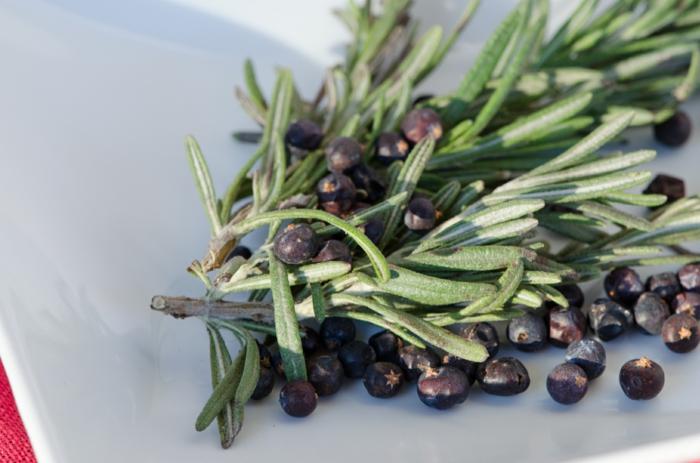 wacholder gebrauch aromatherapie wacholderbeeren wirkung