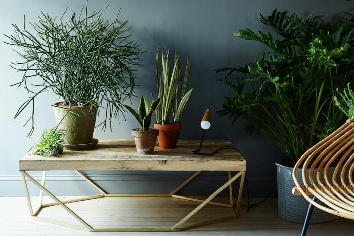 wohnung einrichten bodenbelag interiordesign sauerstoffquelle zu hause zimmeroflanze