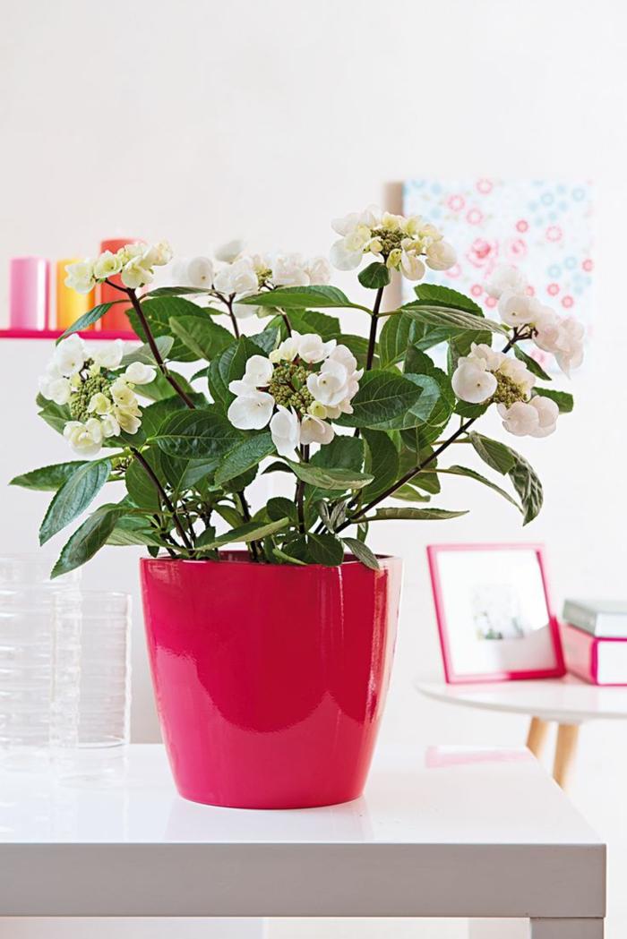 Schöne Zimmerpflanzen: So dekorieren Sie Ihr Zuhause mit ...