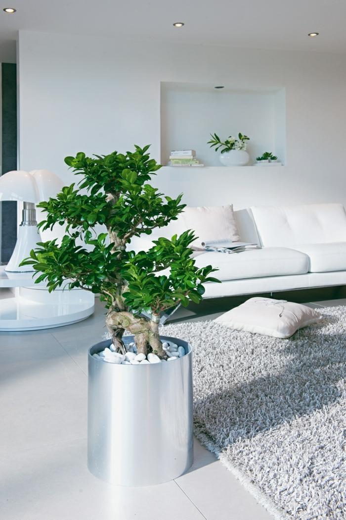 Feng Shui Treppe Im Wohnzimmer Zimmerpflanzen Birkenfeige Benjamini Einrichten