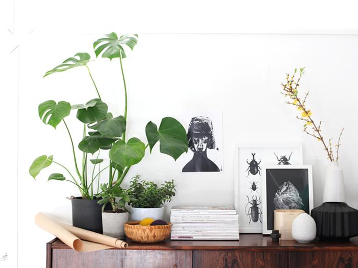 sch ne zimmerpflanzen so dekorieren sie ihr zuhause mit pflegeleichten pflanzen. Black Bedroom Furniture Sets. Home Design Ideas