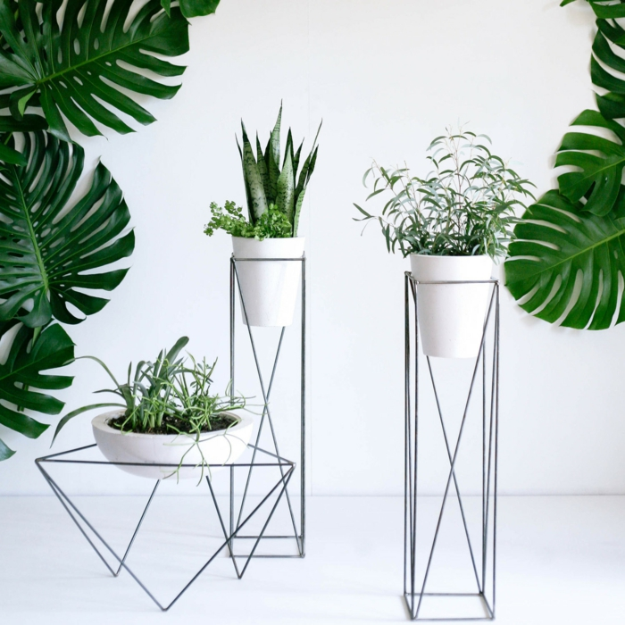 Moderne Grünpflanzen schöne zimmerpflanzen so dekorieren sie ihr zuhause mit