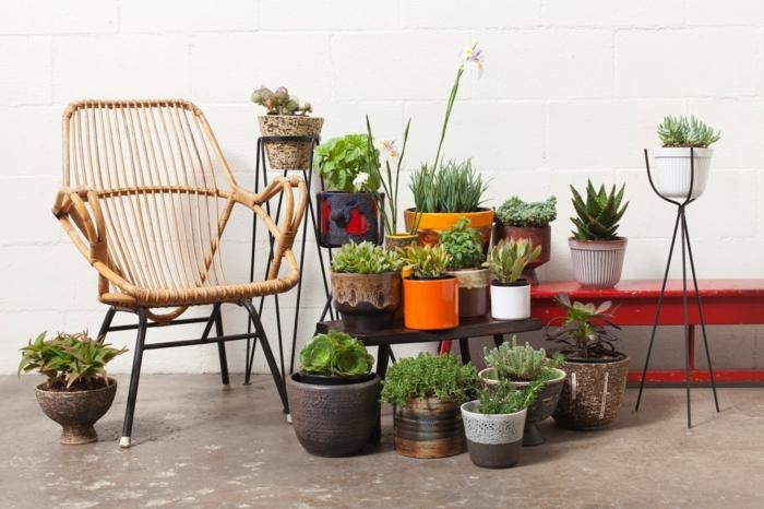 Sch ne zimmerpflanzen so dekorieren sie ihr zuhause mit for Topfpflanzen dekorieren
