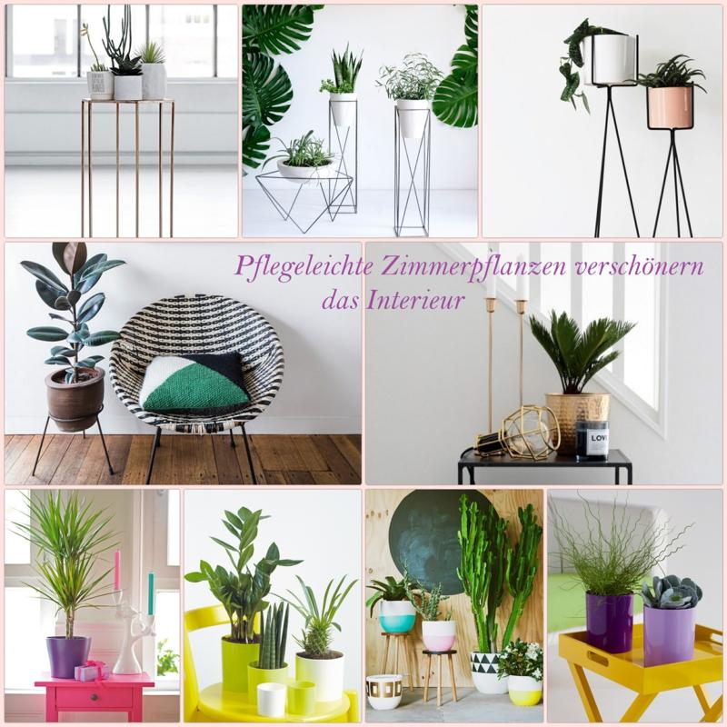 sch ne zimmerpflanzen so dekorieren sie ihr zuhause mit. Black Bedroom Furniture Sets. Home Design Ideas