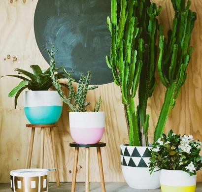 Schone Zimmerpflanzen So Dekorieren Sie Ihr Zuhause Mit