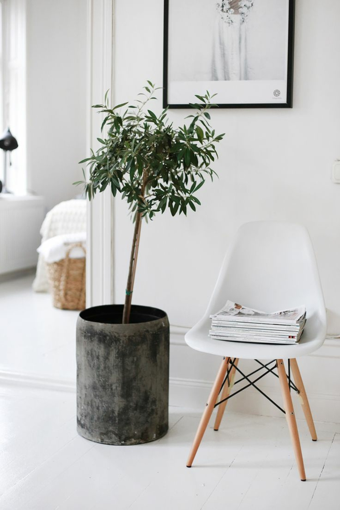 Dekorieren Sie Ihr Zuhause mit schönen Zimmerpflanzen, die auch pflegeleicht sind