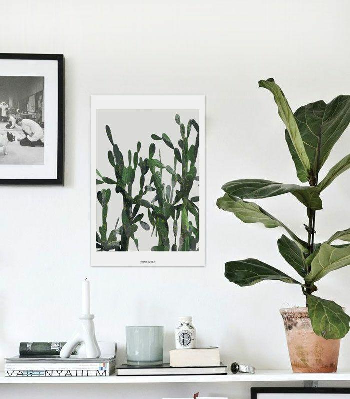 Sch ne zimmerpflanzen so dekorieren sie ihr zuhause mit for Zimmerpflanzen dekorieren