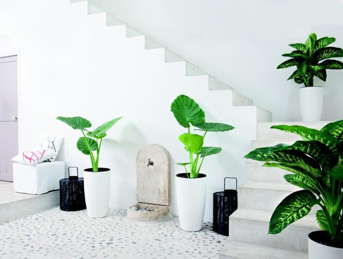Zimmerpflanzen Wohnideen ? Bitmoon.info Zimmerpflanzen Wohnideen